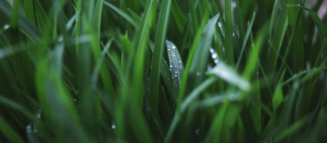 sostenibilidad-idrospania
