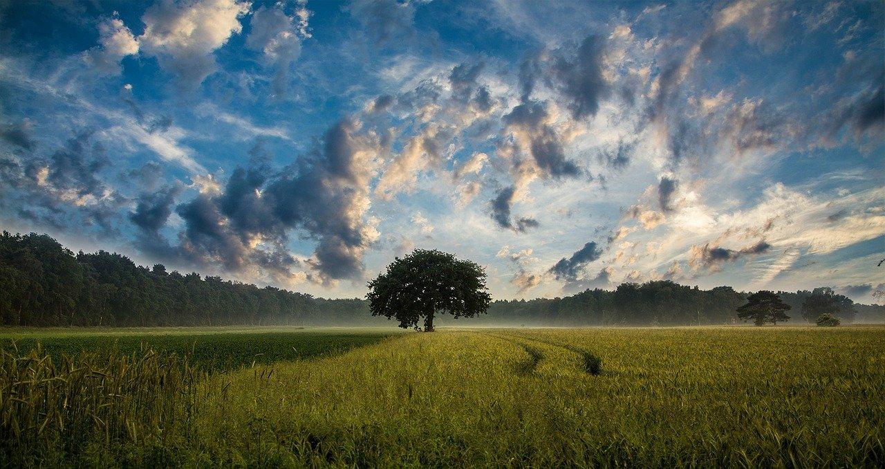 tree-247122_1280
