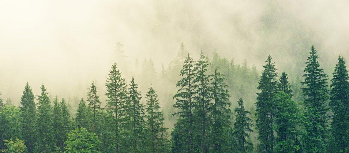 fog-3622519_1280